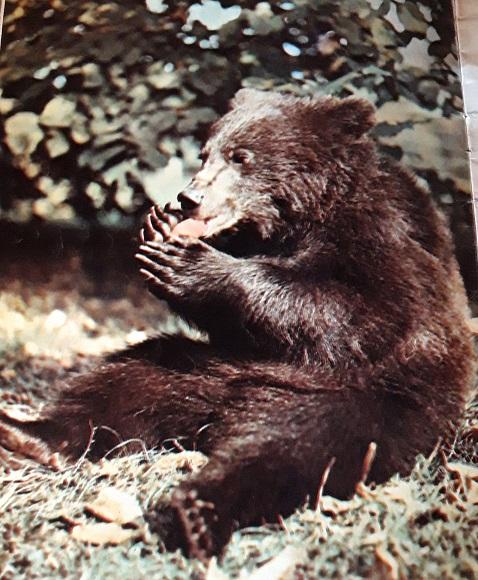 медведь урал чувал