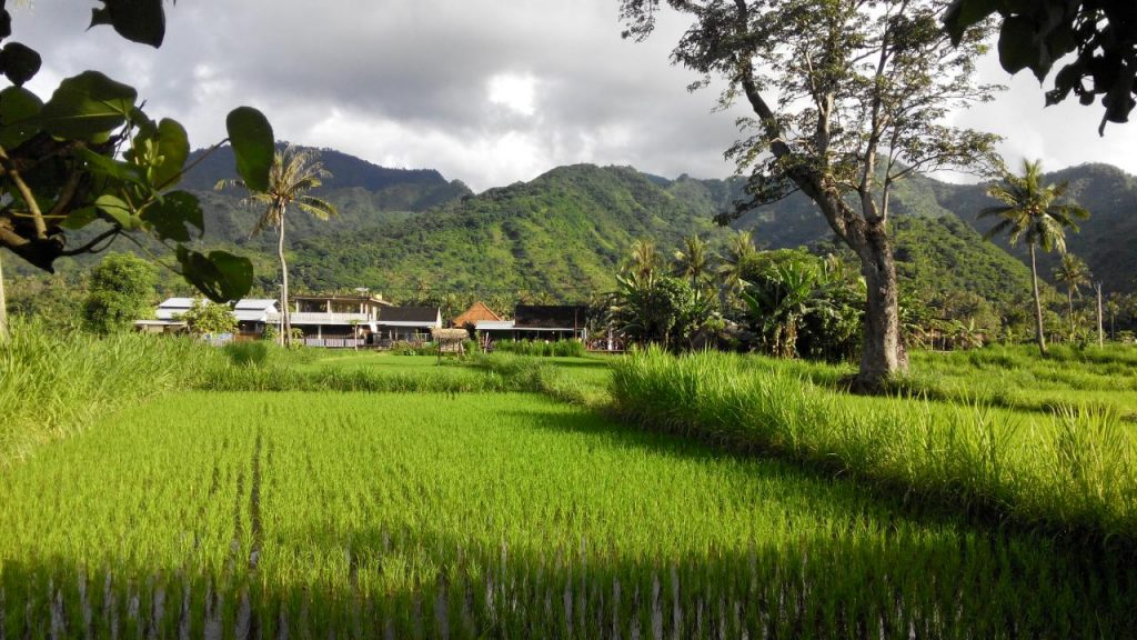 Остров Бали, Амед