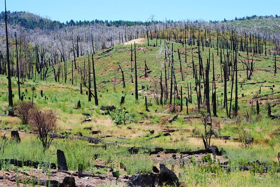 природные катаклизмы лесной пожар
