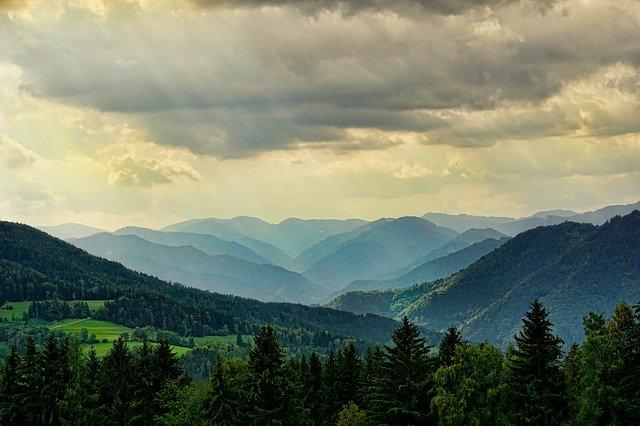 сохранение и восстановление лесов
