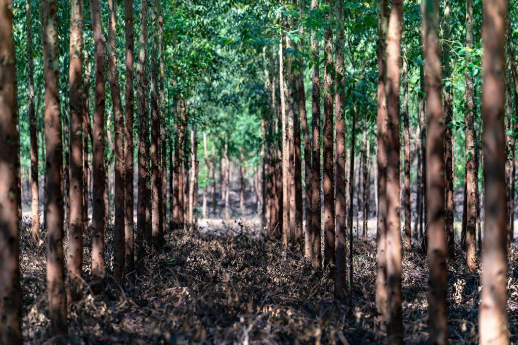TreeCoin проект