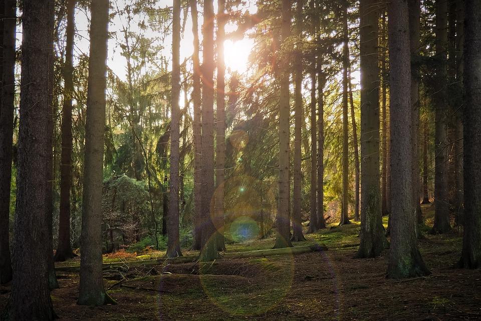 Восстановление лесов на планете