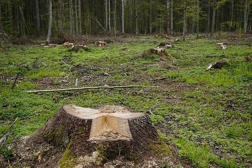 вырубка лесов заготовка древесины