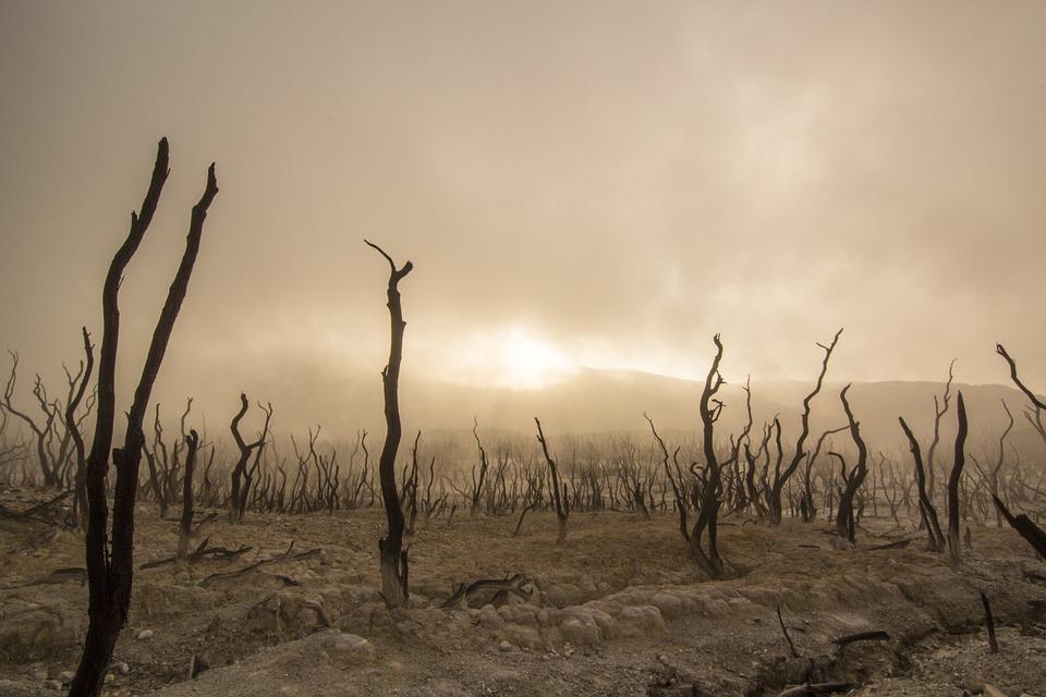 вырубка лесов экологические проблемы лес загрязнение