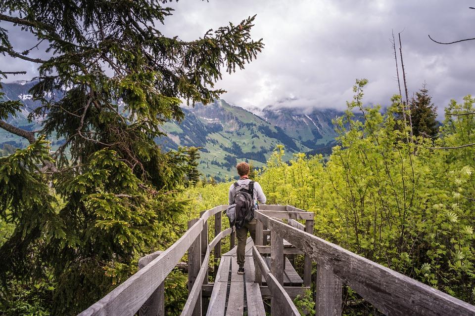 восстановление лесов молодой лес