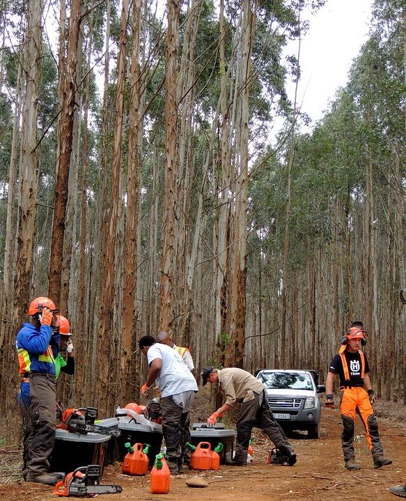 вырубка леса лесоруб